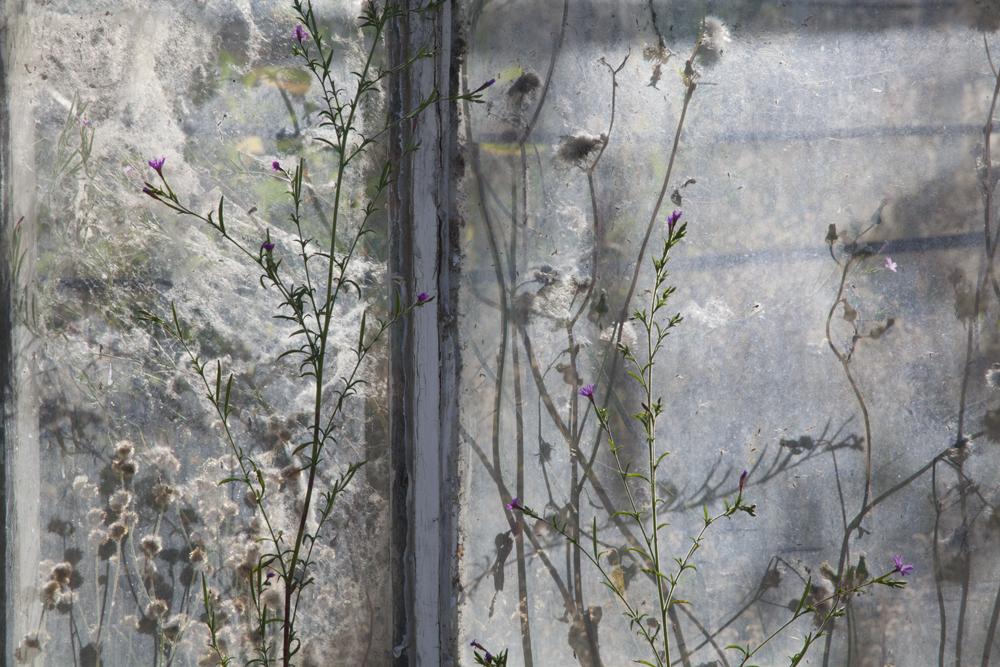 "Tamara Danoyan - ""Windowscape"" 2011"